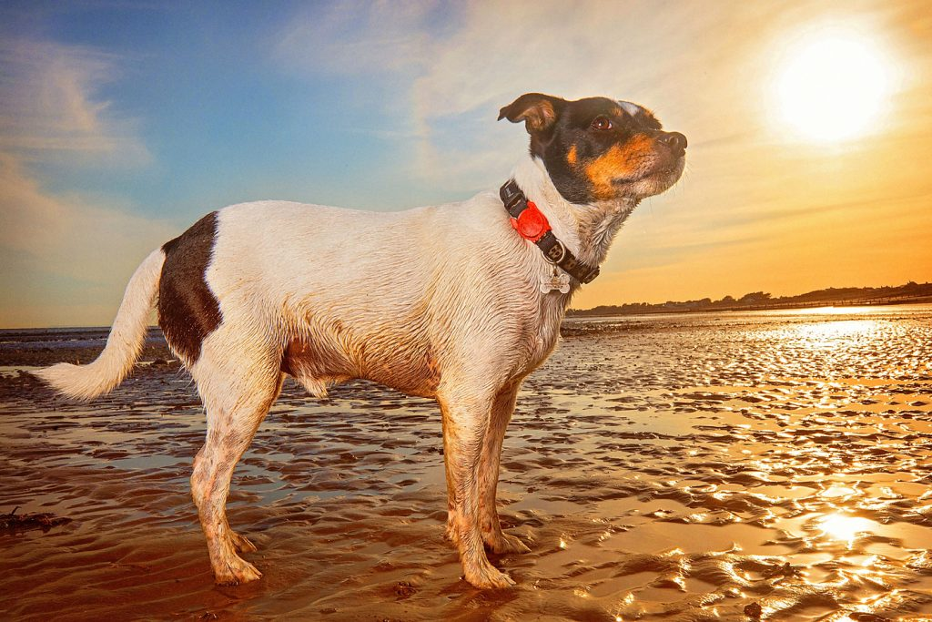 Pet photo shoot on the beach with Staffordshire in West Sussex