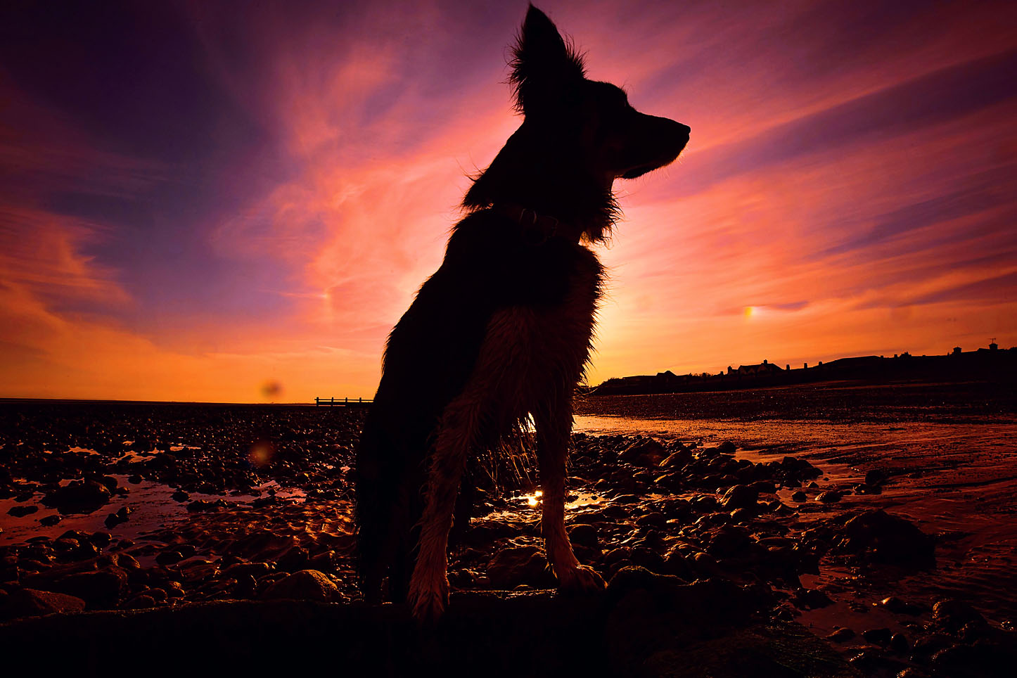 Dog photographed at sunset on the beach in West Sussex, dog photography on the beach, sunset pet photography