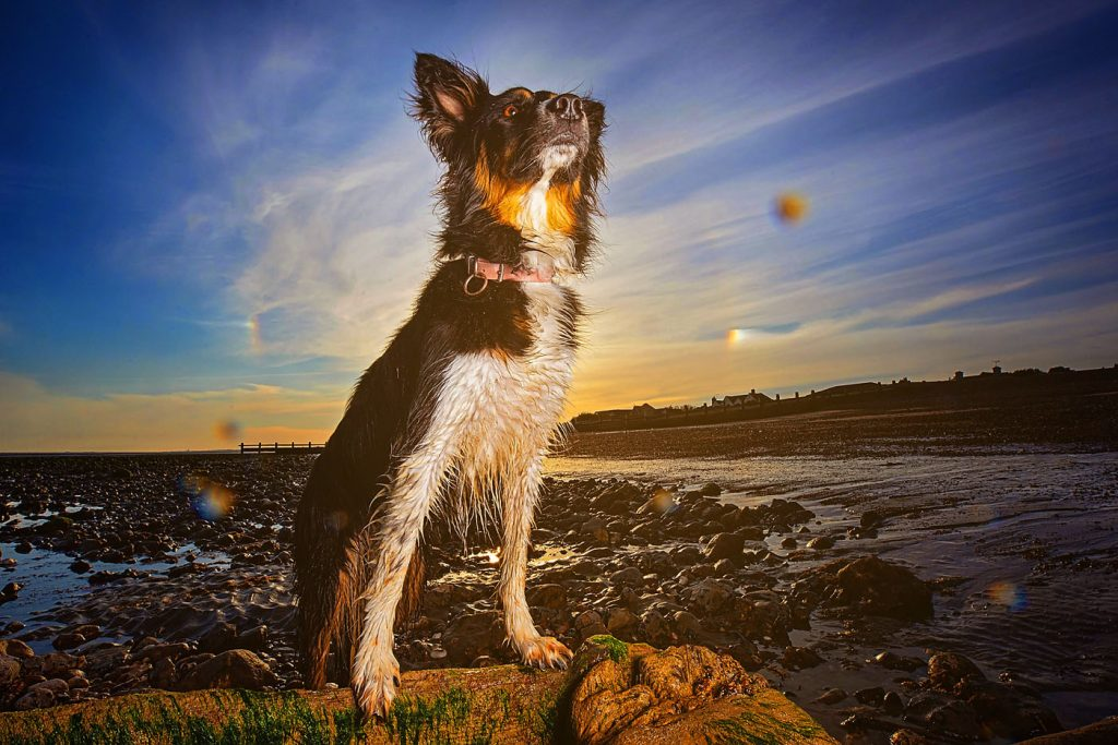Outdoor dog photo session on the beach in Ferring, West Sussex